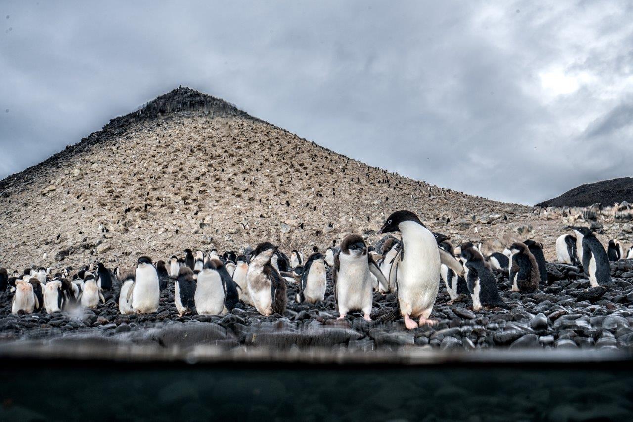 Спасение Антарктиды 2017 г.